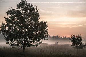 Morgennebel in der Bordelumer Heide von Annette Sturm