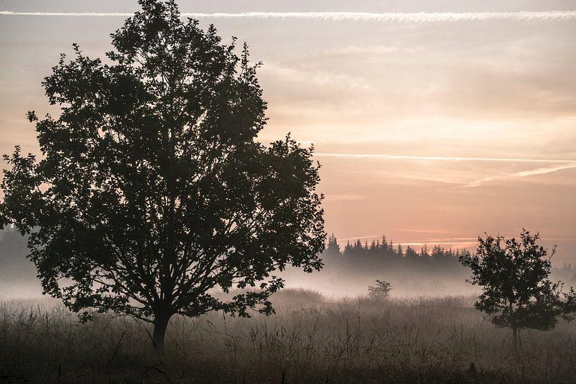Morgennebel in der Bordelumer Heide van Annette Sturm