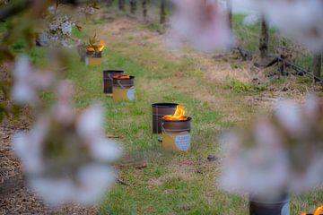 Vuurpotten tussen de fruitbomen von Moetwil en van Dijk - Fotografie