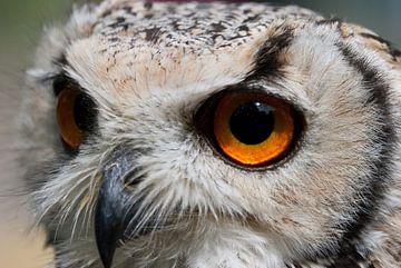 Look into my eyes van Jarno Pors