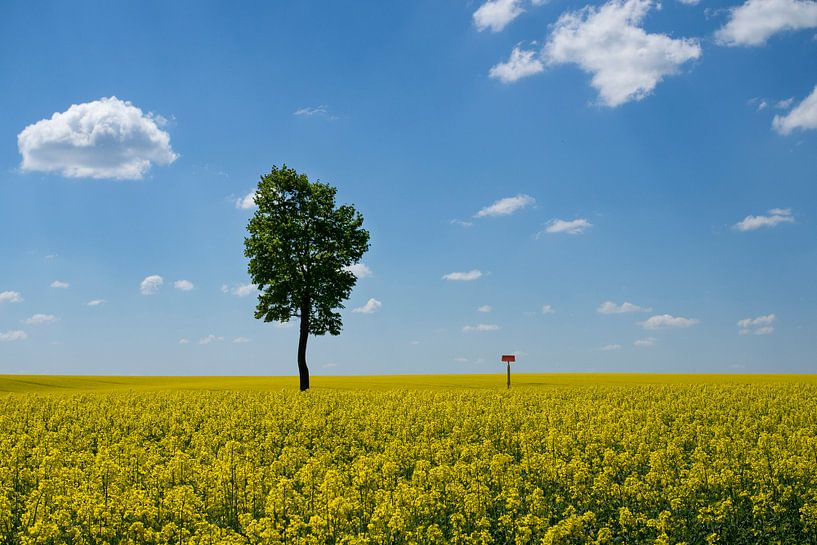 Yellow fields van Joke Absen