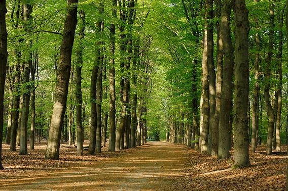 Groen lentebos van Merijn van der Vliet