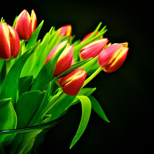 Tulpen van Dennis Beentjes