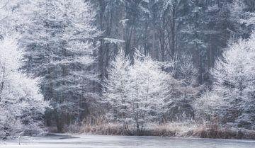 Winter op het bevroren meer van Tobias Luxberg