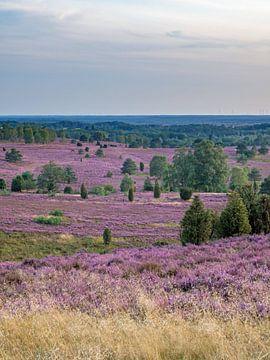 Uitzicht vanaf de Wilseder Berg, Lüneburger Heide van Katrin May