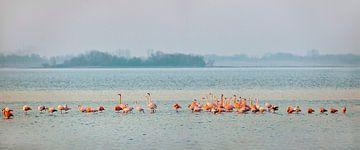 Flamingos im Grevelingen-See von Frans Lemmens