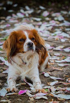 Hond tussen bloesemblaadjes van Malu de Jong