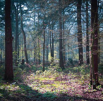 Voorbij de bomen van Elle Rowbottom