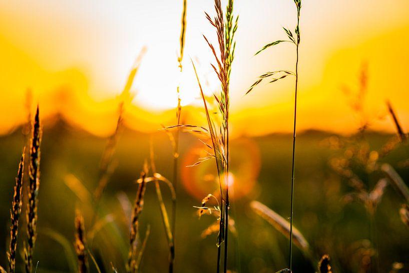 Graanveld bij zonsondergang met goudkleurige gloed van Jan Hermsen