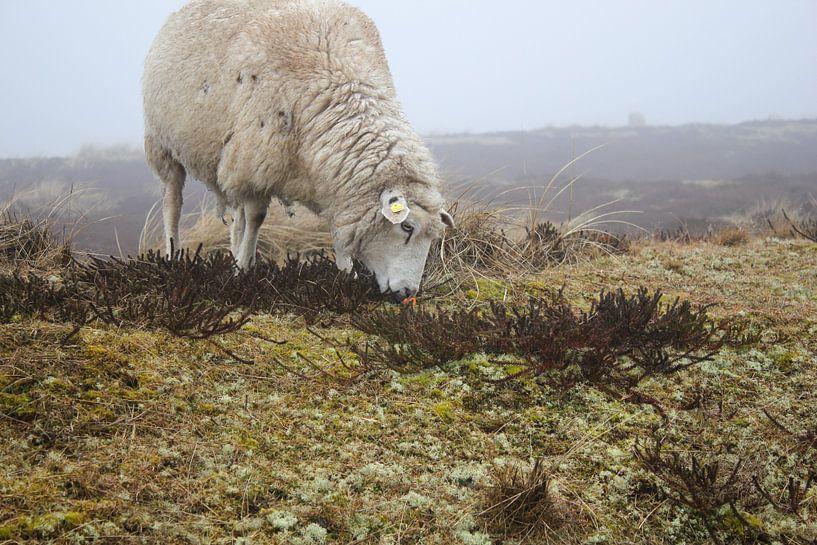 Schaf von Florian Kampes
