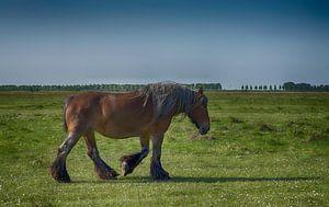 Pferd in der Landschaft von Zeeland von FotoGraaG Hanneke
