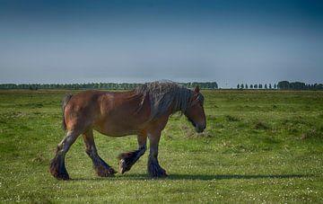 Paard in Zeeuws Landschap van FotoGraaG Hanneke
