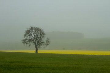 Boom in de mist van René Groenendijk