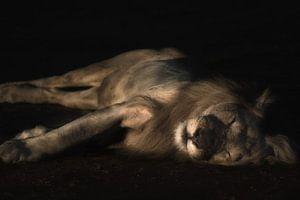 Slapende leeuw van