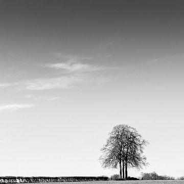 Eenzame boom van Rob van der Pijll