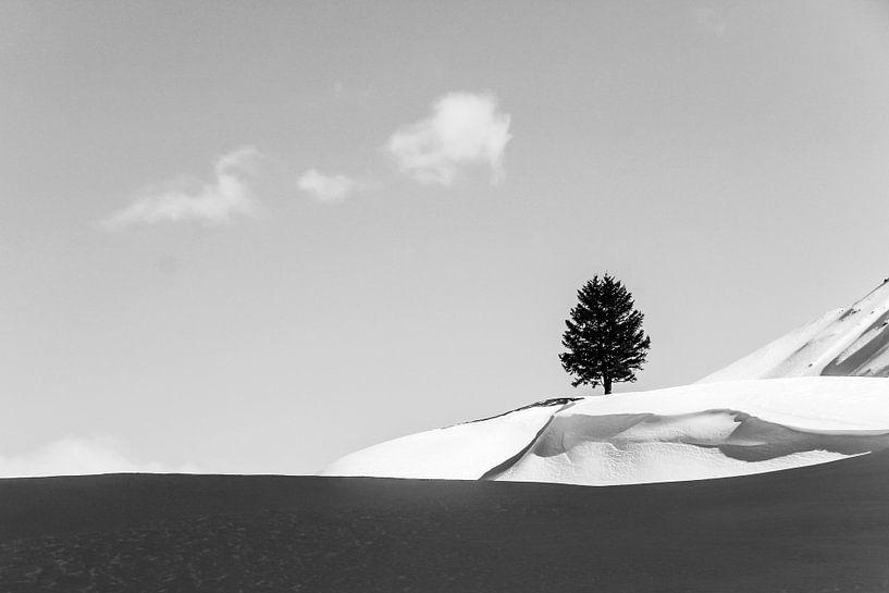 Lonely Tree van Maartje Hustinx-van Lanen