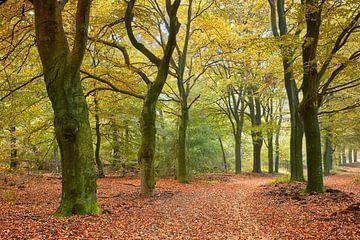 Bospad in Hoog Buurlo in de herfst van Cor de Hamer