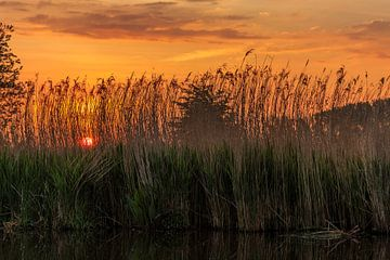 Sfeervolle zonsopkomst tijdens een boottochtje op de Blankaart te Diksmuide von Fotografie Krist / Top Foto Vlaanderen