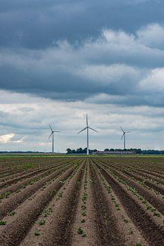 drie molens in Flevoland