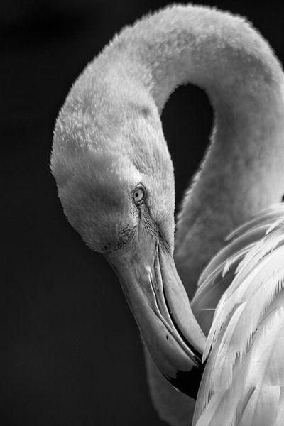 Flamingo von Renate Peppenster