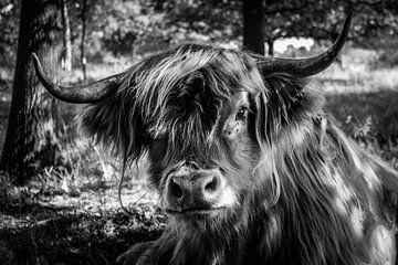 Schotse hooglander in B&W van Laura Reedijk