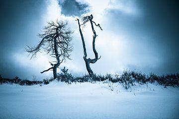 Creepy Trees of Noir Flohay van Peter Deschepper
