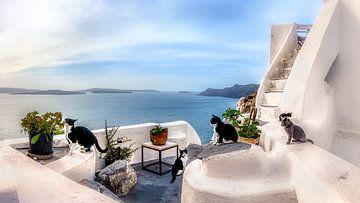 De katten van Santorini in Griekenland van Fine Art Fotografie