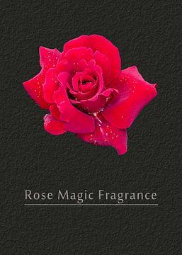 Rose Magic Fragrance van Leopold Brix