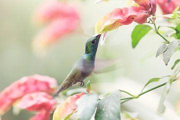 Kolibri von Ellen van Drunen