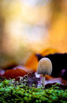 Mushroom sur Nicky Kapel