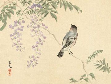 Oiseau sur wisteriatak, Matsumura Keibun - 1892