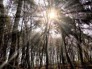 """Zonnestralen in het bos """"de Zevenbergen"""", Plasmolen bij Mook van Jeroen Hoogakker"""