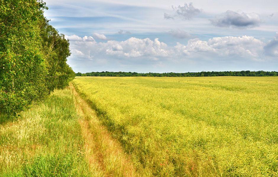 Feldweg van Violetta Honkisz