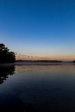 Overvliegende vogels bij zonsopkomst