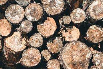 Troncs d'arbres sur Perry Wiertz