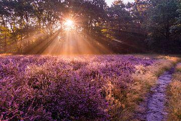 Sonnenaufgang in der Heide von Cees de Vreugd
