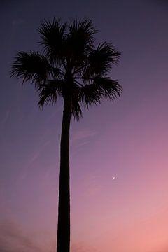 Palmboom, paarse lucht door zonsondergang en kleine maan. van Yvette Baur