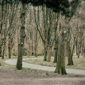 Forêt d'Amsterdam sur Erik Reijnders