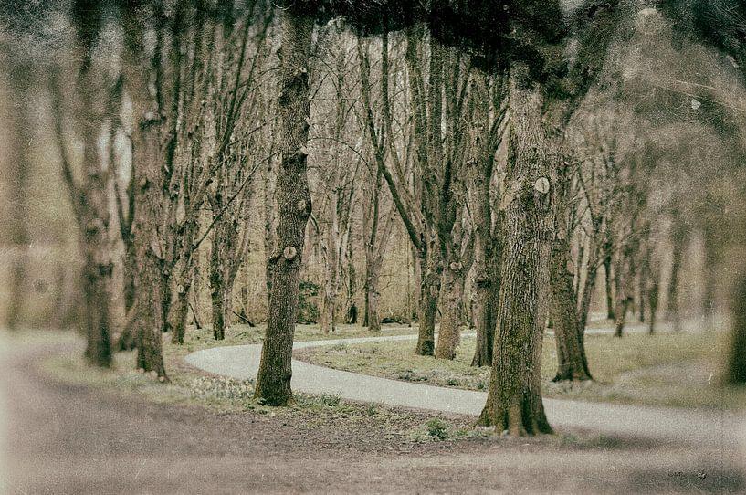 Amsterdamse Bos van Erik Reijnders