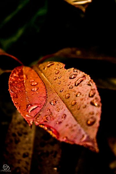 Herfstkleuren van Dc photography Lam