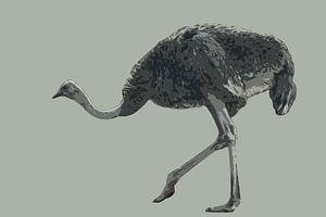Lopende struisvogel
