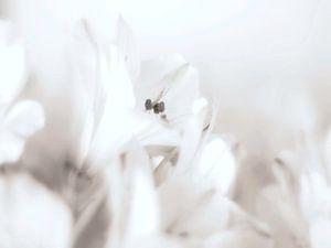 Wit op wit