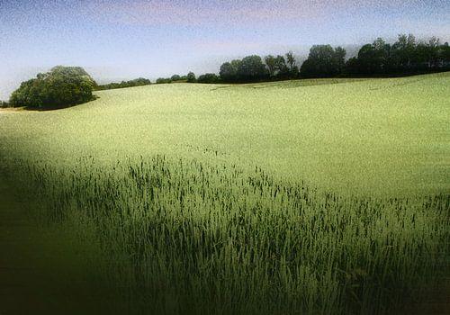 graanlandschap van
