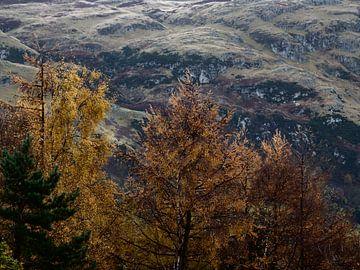 Highlands in Schottland von Mia Blanche