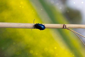 bug van sarp demirel