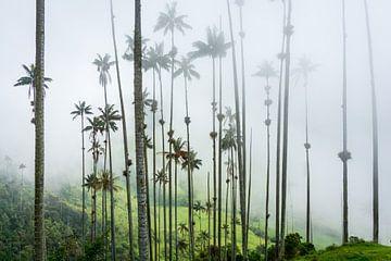 Hohe Palmen reichen in den Nebel, im Cocora-Tal in Kolumbien. von Twan Bankers