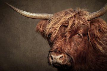 Schotse Hooglander portret: kop van dichtbij in bruin van Marjolein van Middelkoop