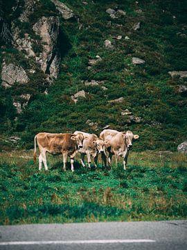 Kühe von Rianne Jacobs