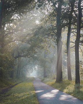 Zonsopkomst in de Oisterwijkse Bossen en Vennen von Peter Nolten