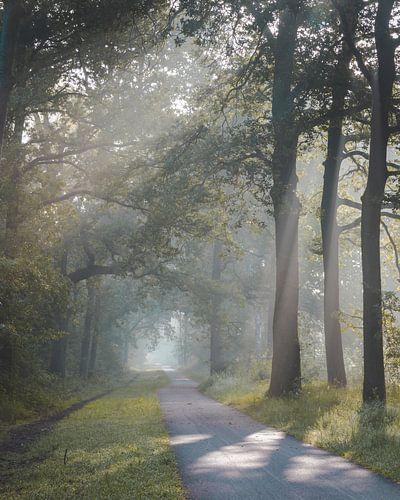 Zonsopkomst in de Oisterwijkse Bossen en Vennen van Peter Nolten